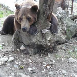 ursul-baloo1-400x400