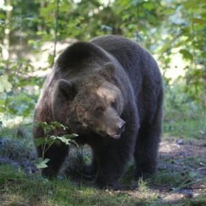 ursul-baloo2-400x400