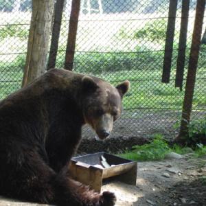 ursul-baloo3-400x400 (1)